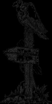 Ein Aschegeier wartet am Knochenpfad auf seine Essenslieferung.